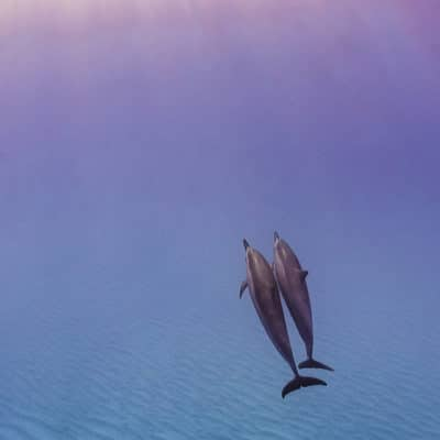 Worship - Hawaii Ocean Photography - dolphins