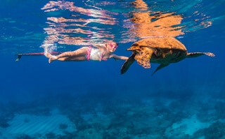 underwater ocean photography sea turtles