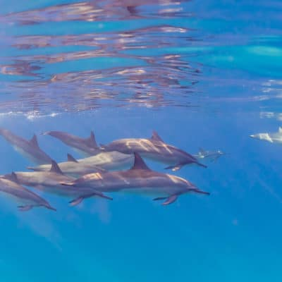 Dolphins in the Sun - Hawaii Ocean Photography