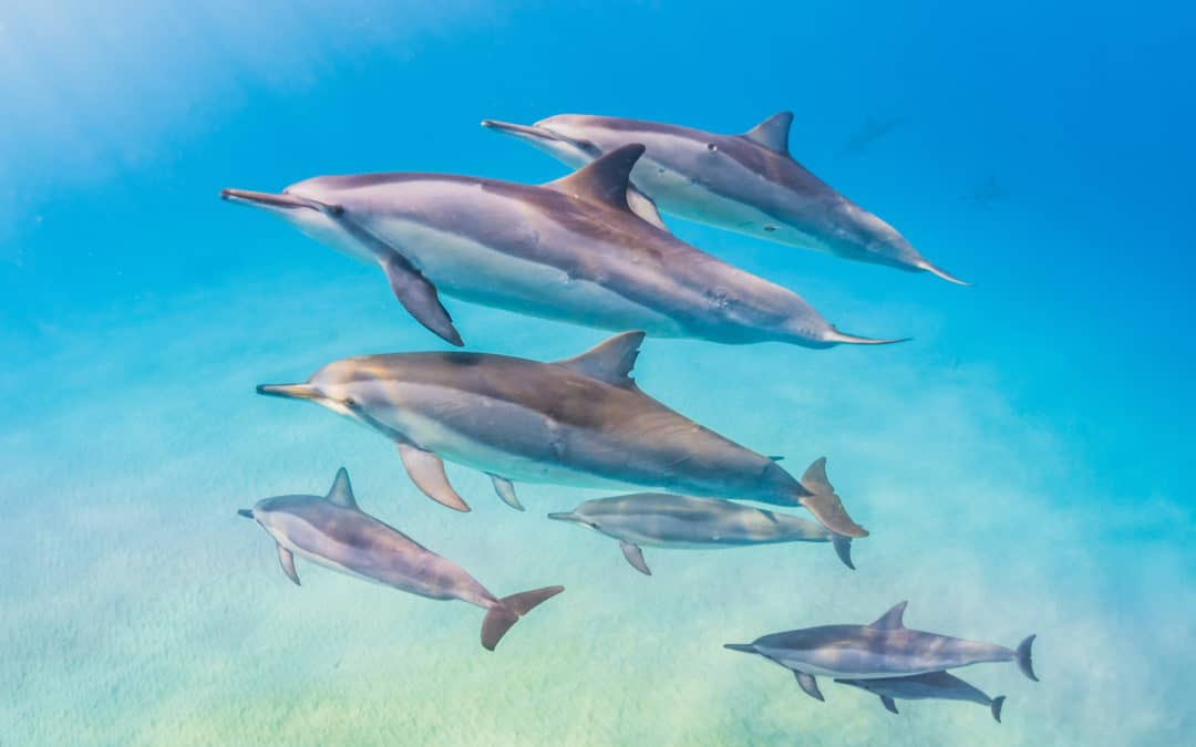 How about a dolphin print for mom this year? Shop the Mother's Day sale!