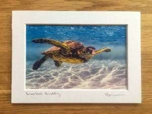 Snorkel Buddy - Hawaii Ocean Photography