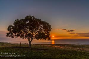 Koa SunsetHawaii Ocean Photography